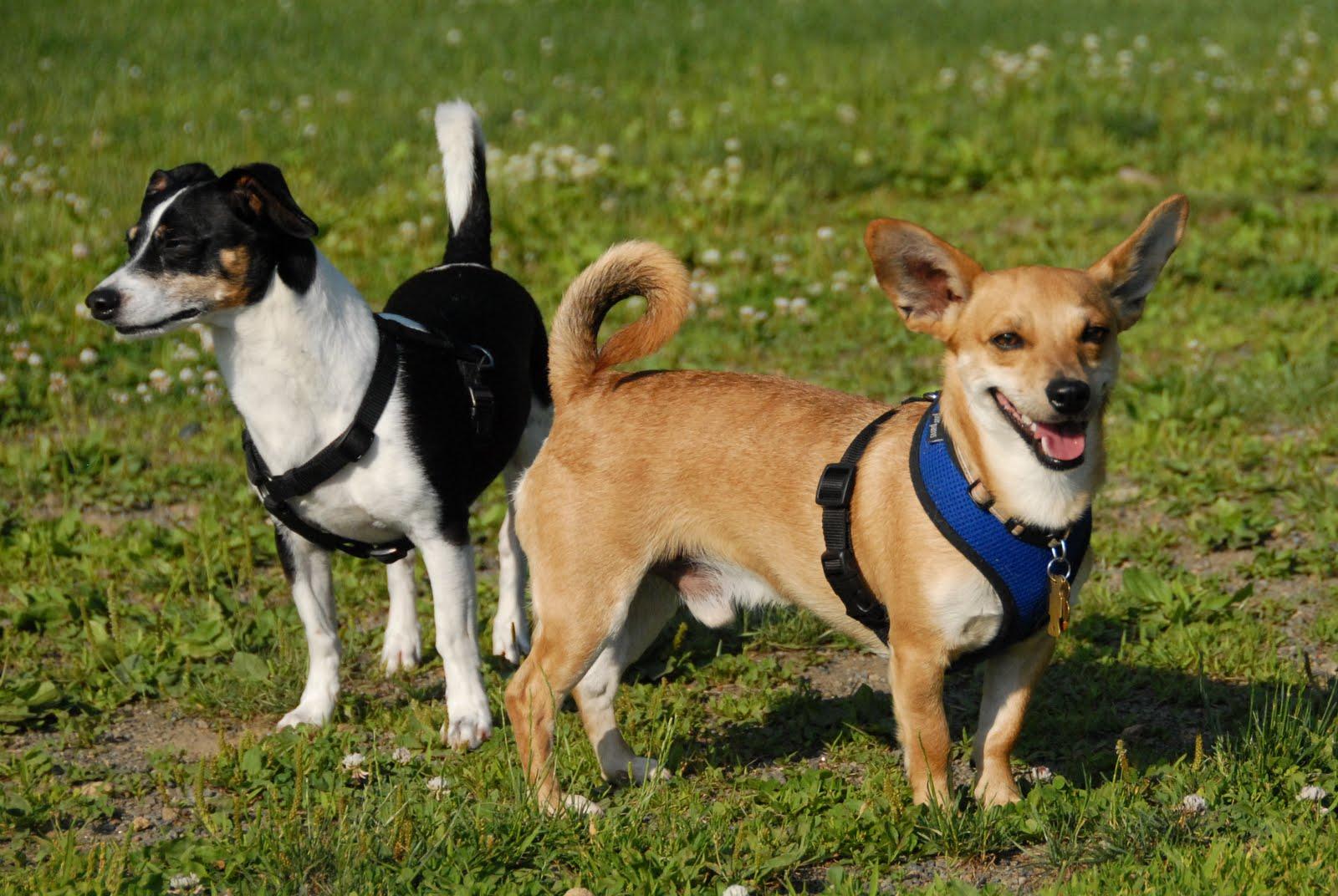 Sonny | Morris County and Denville, NJ Dog Parks