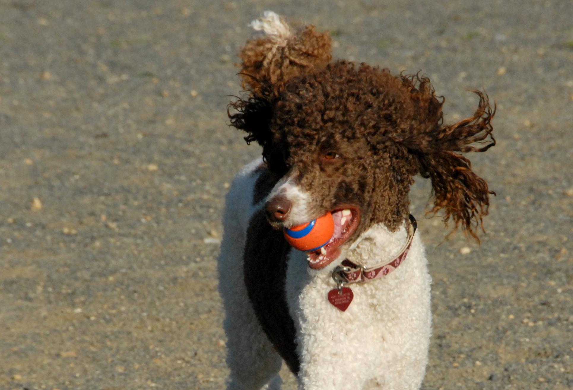 Moose | Morris County and Denville, NJ Dog Parks