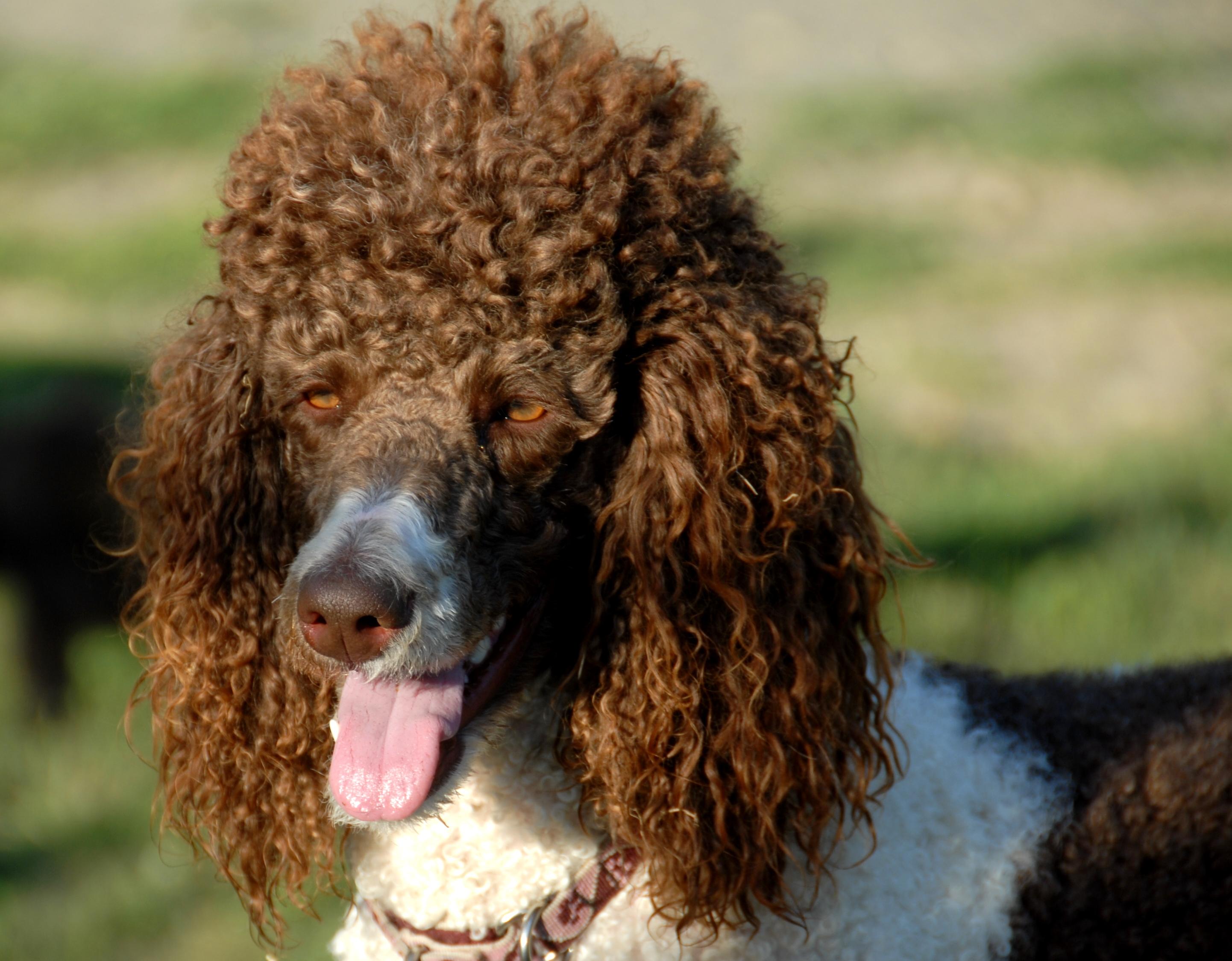 Milo | Morris County and Denville, NJ Dog Parks