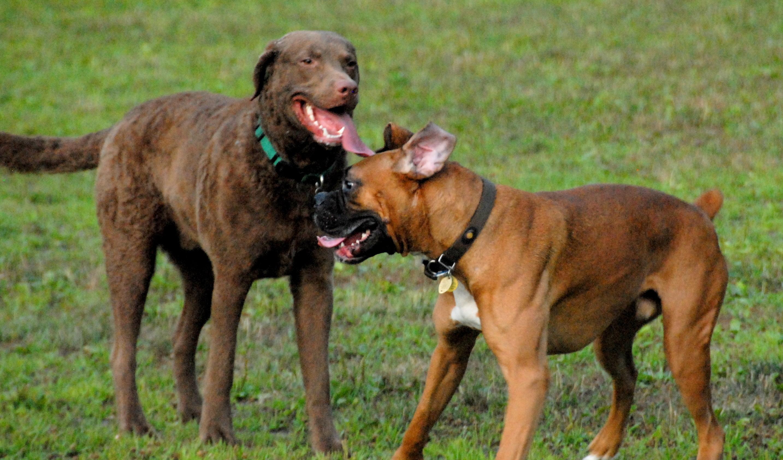 Spot | Morris County and Denville, NJ Dog Parks