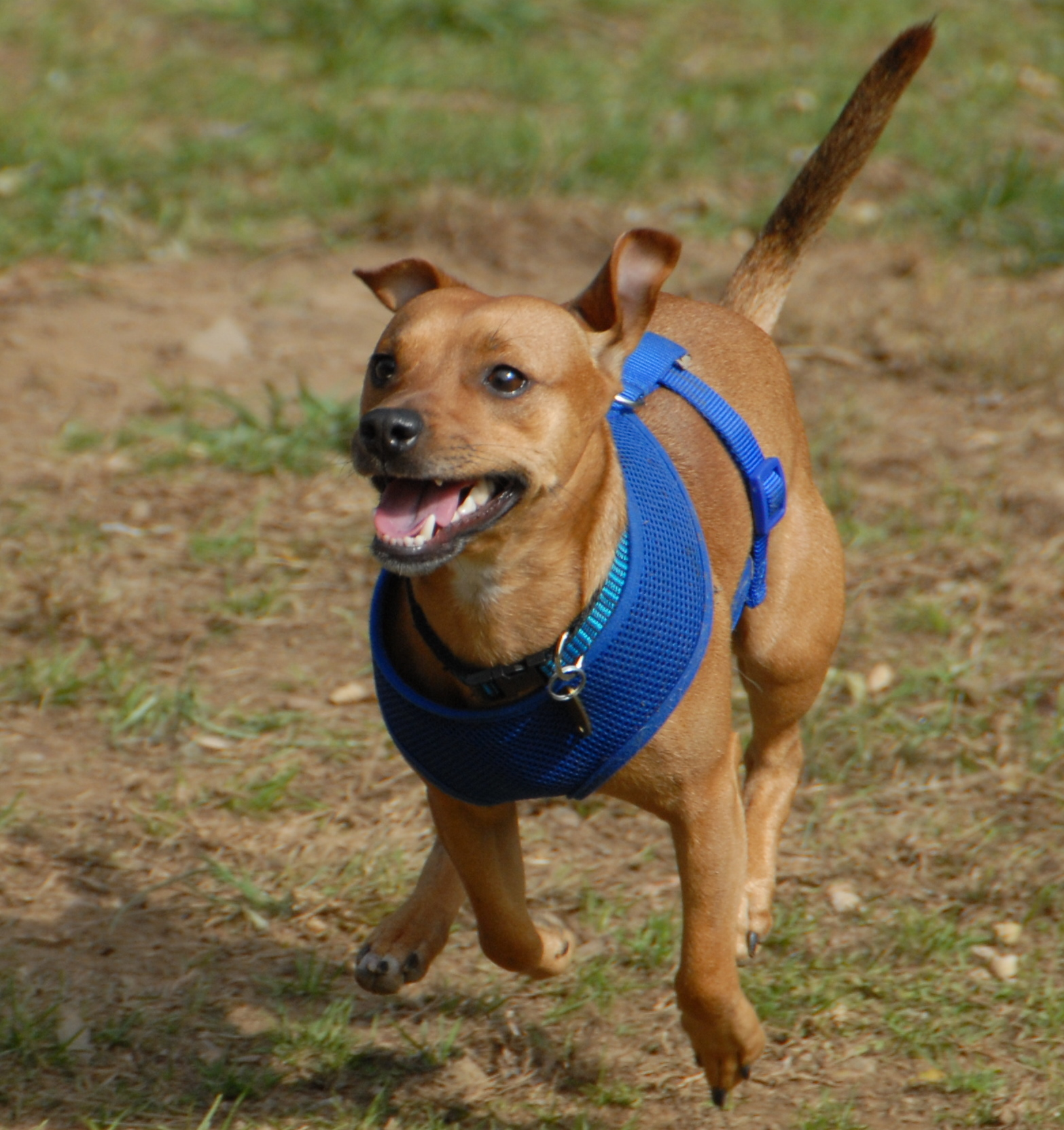 Dutch | Morris County and Denville, NJ Dog Parks