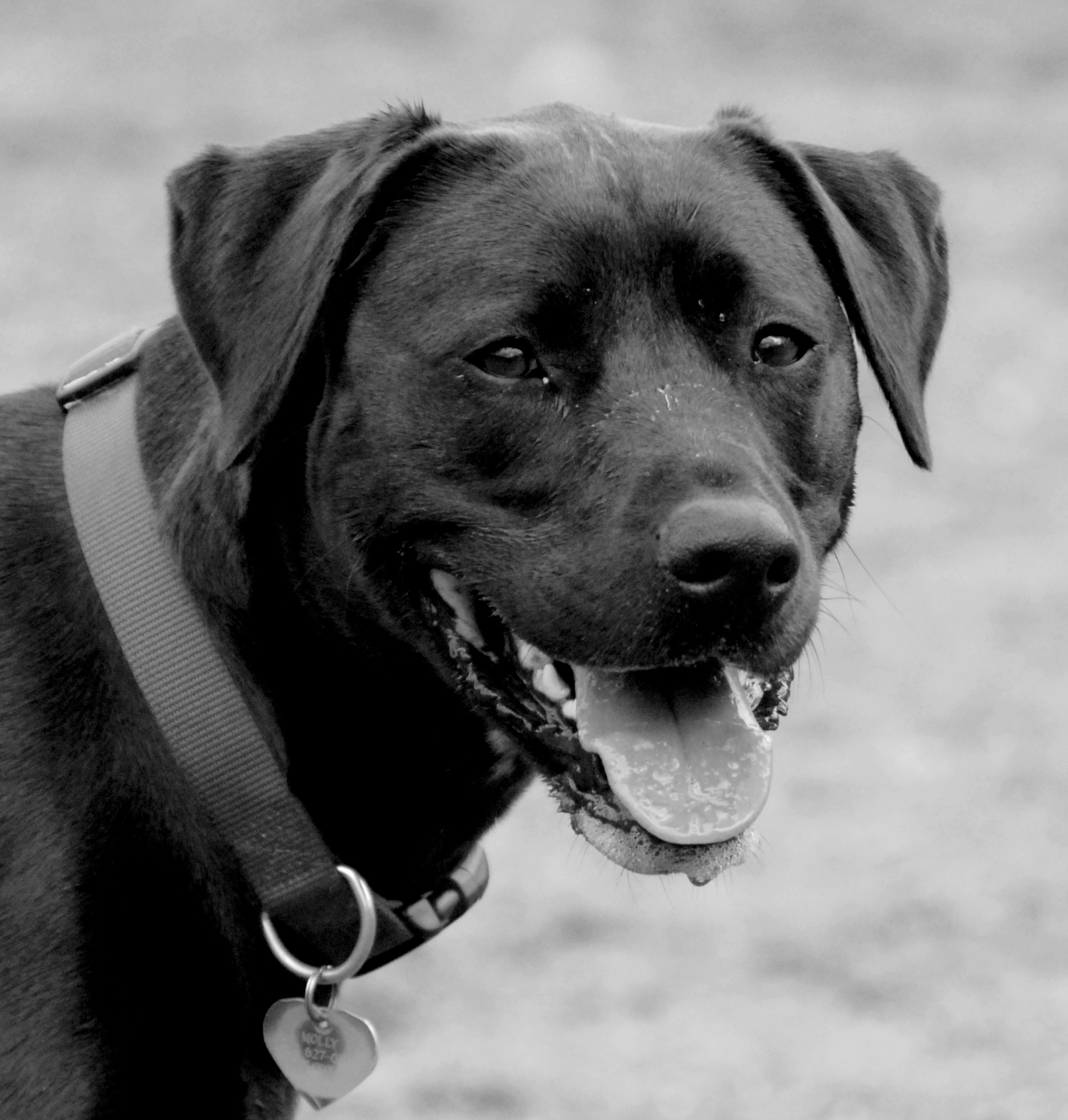 Dog Agility Training Morris County Nj