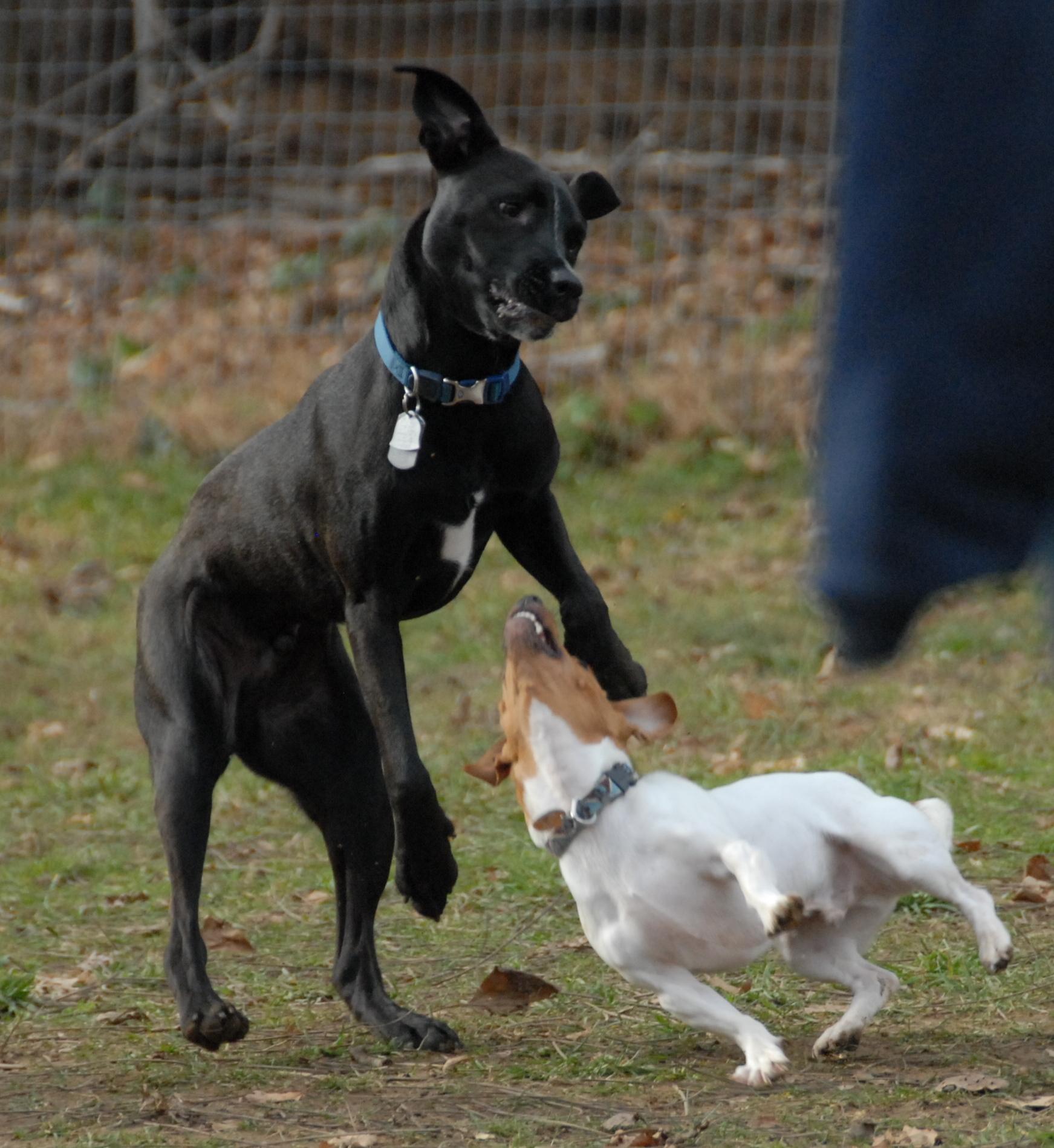 November | 2011 | Morris County and Denville, NJ Dog Parks